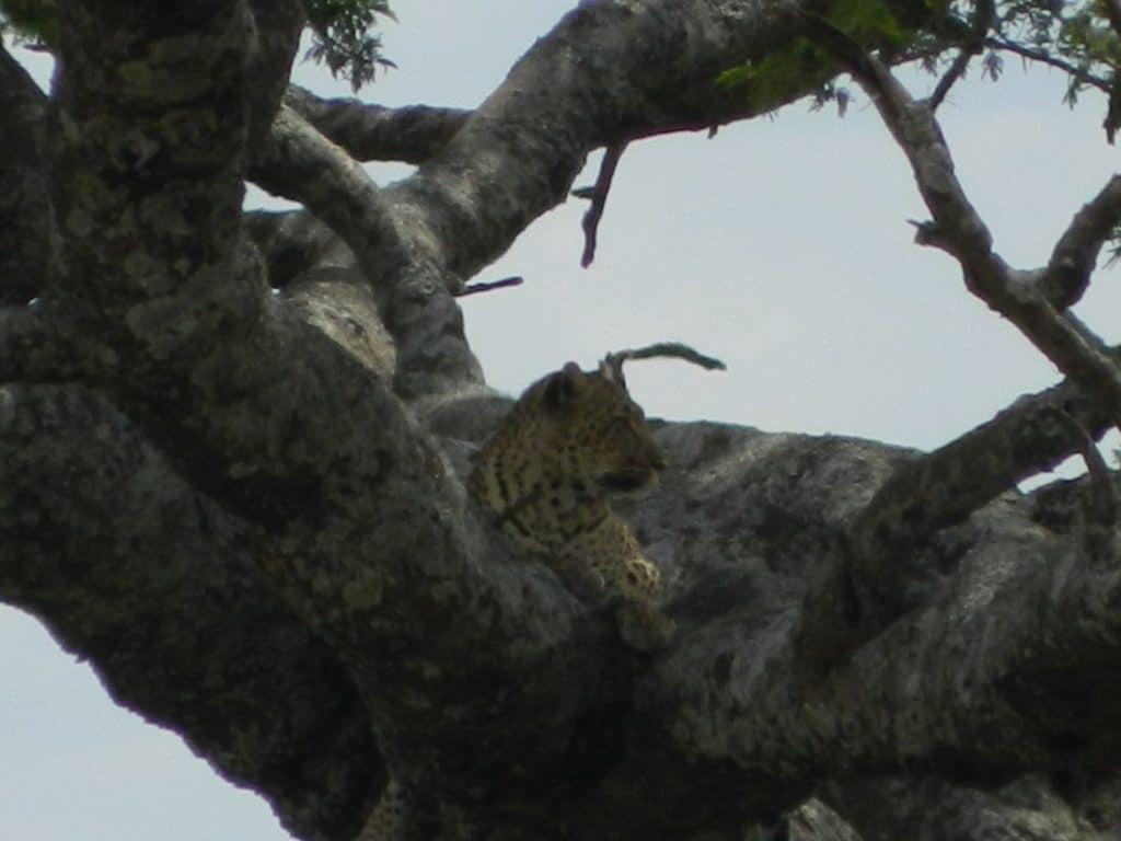 Afrique-kenya-animaux-stf-goyav