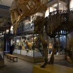 France-Lille-musee-histoire-naturelle-et-geologie-goyav