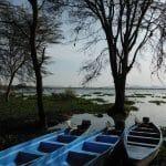 afrique-kenya-lac-nakuru-goyav