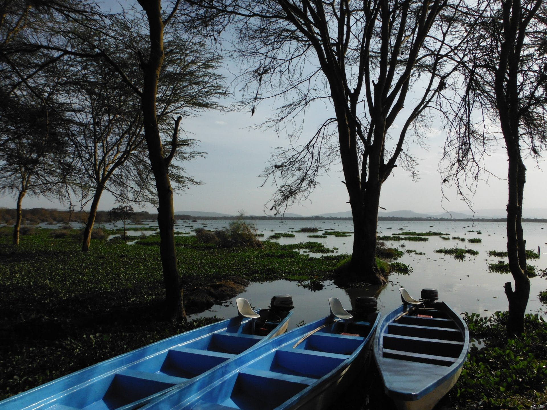 Afrique-kenya-lac-stf-goyav