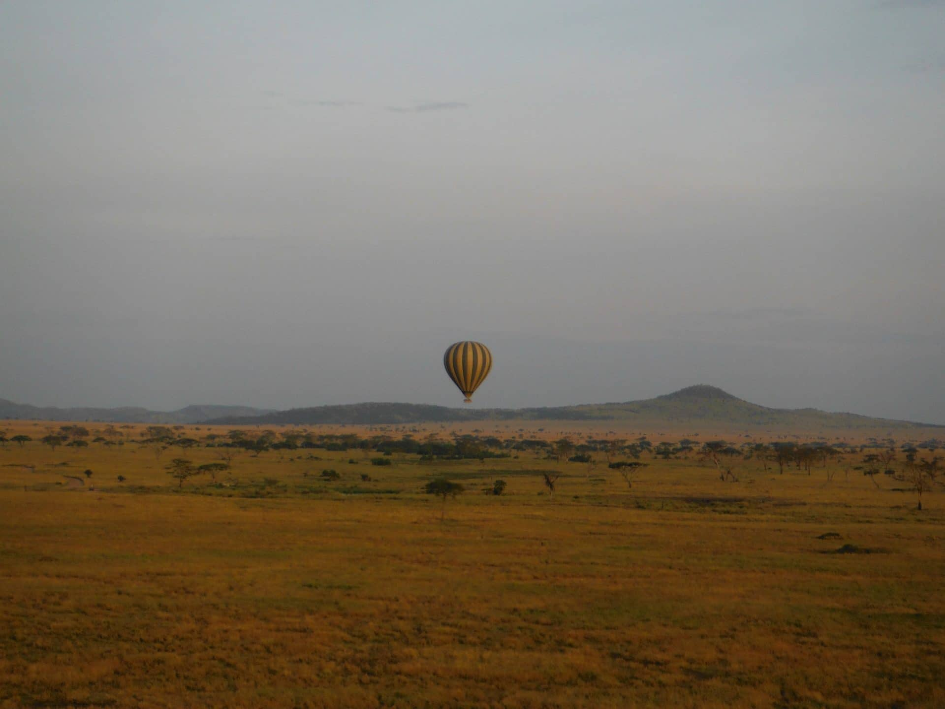 tanzanie-parc-national-Serengeti-goyav