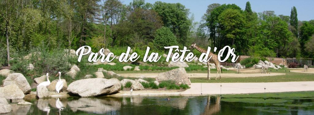 France-lyon-parc-de-la-tete-d-or-goyav