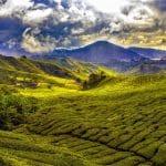 malaisie-montagnes-goyav