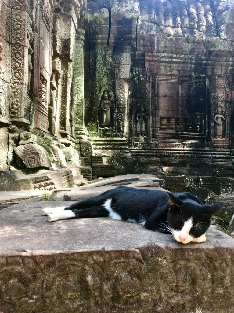 chat Gardien du temple angkor cambodge