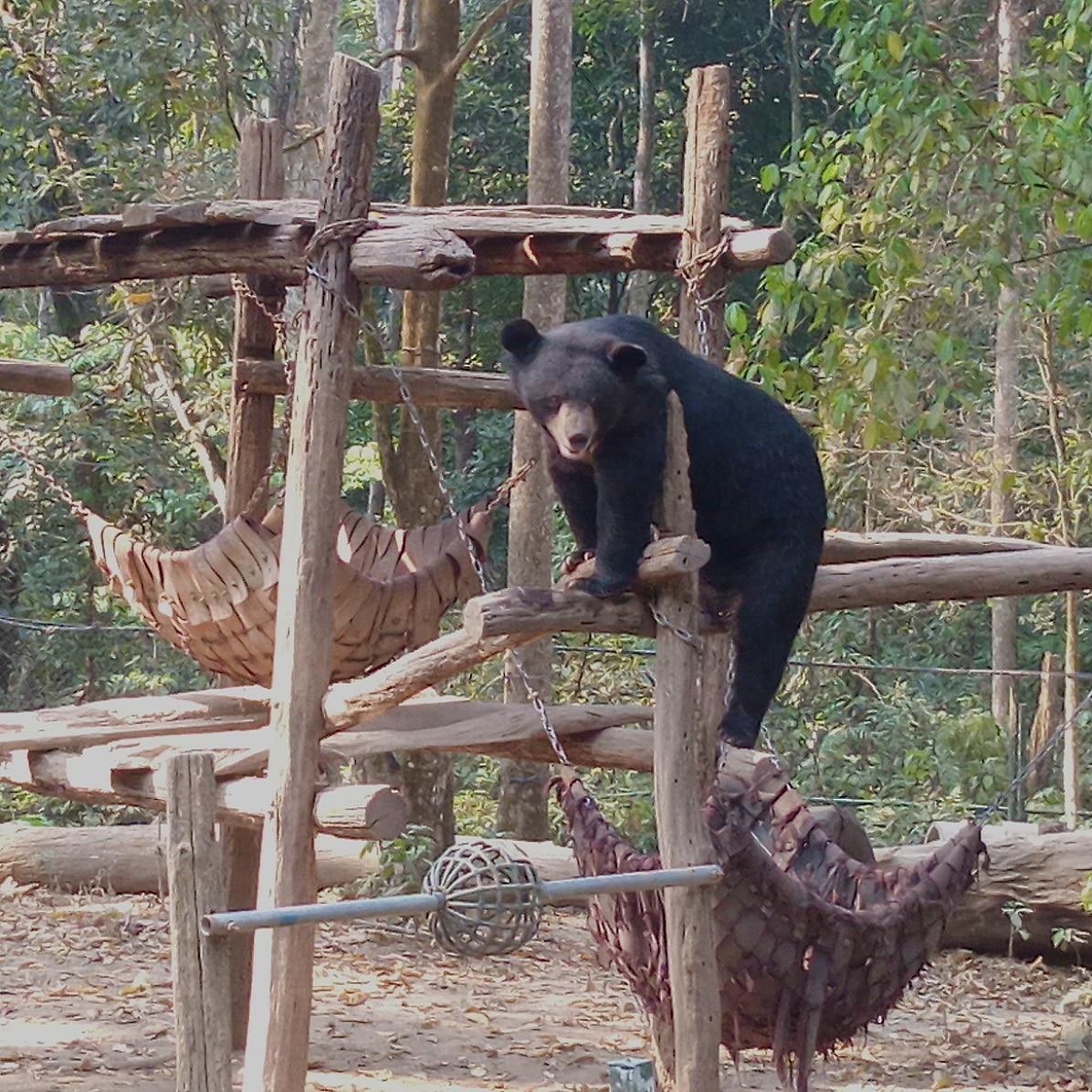 Ours Noirs dans le Parc Nham Dong