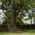 Le Sri Lanka et ses milliers de temples