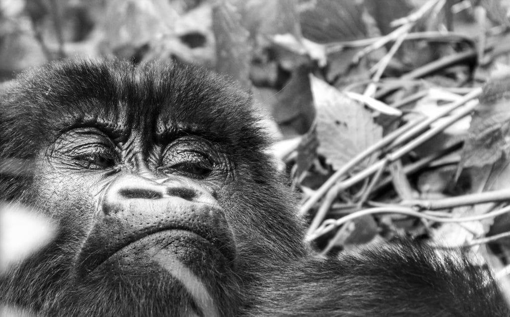 Parc des Virunga