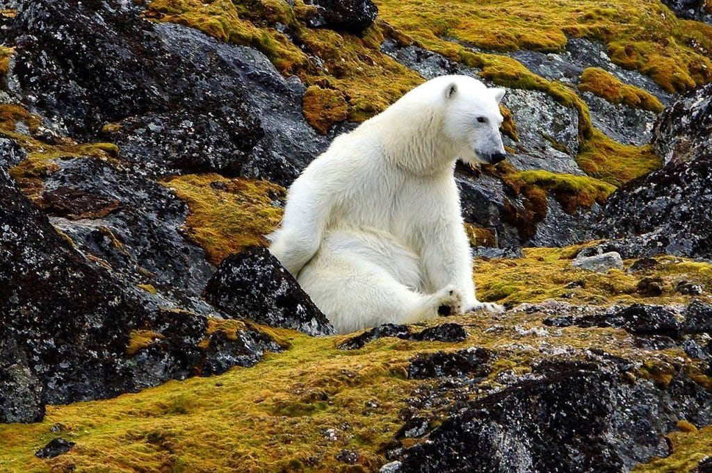 Les îles du Svalbard