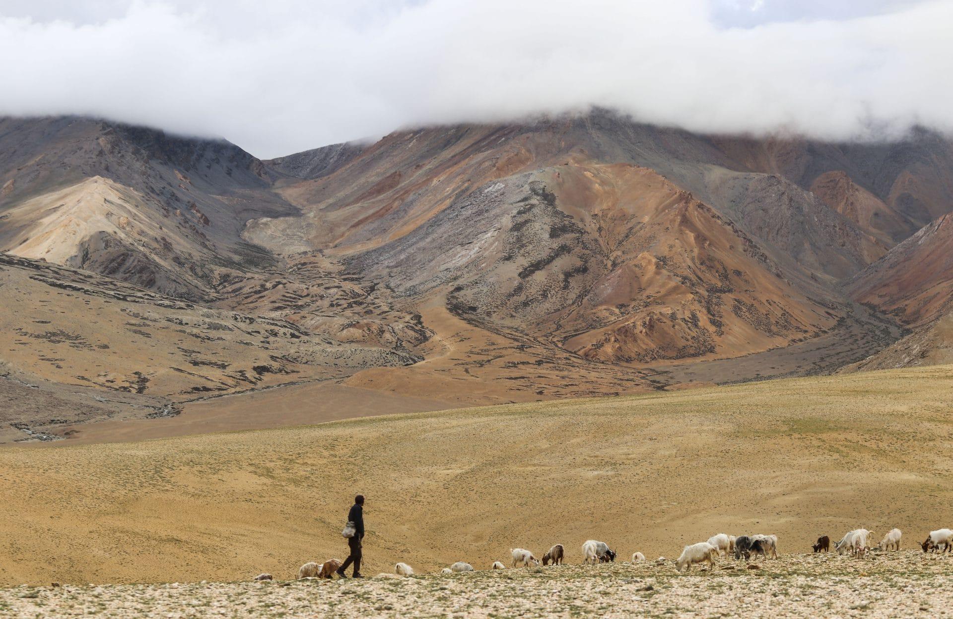 Le berger, Région du Ladakh en Inde