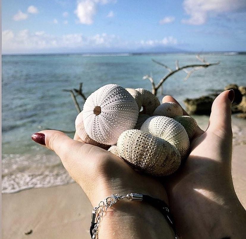 Oursins sur la plage de Malendure en Guadeloupe basse terre