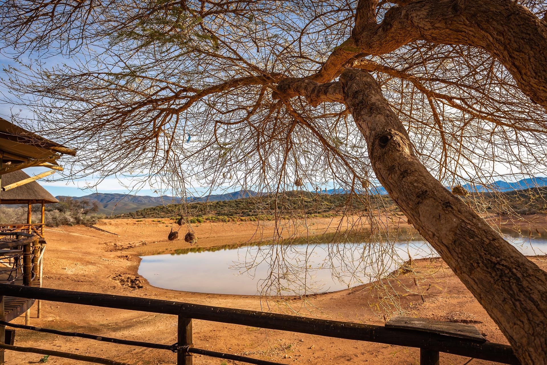 meilleures-destinations-safari