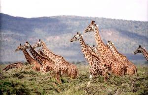 bien-choisir-son-safari