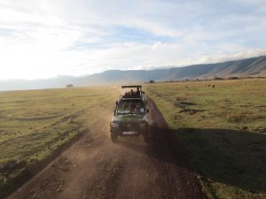 respecter-nature-animaux-safari