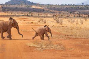 pourquoi-partir-en-safari