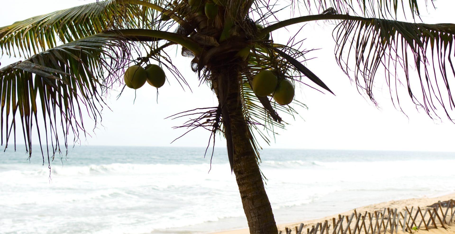 cocotier bassam plage côte d'ivoire.jpg