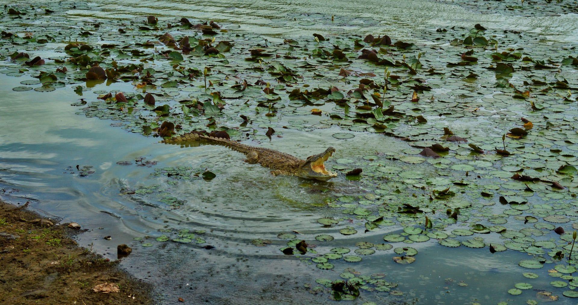 lac des crocodiles palais présidentiel yamoussoukro
