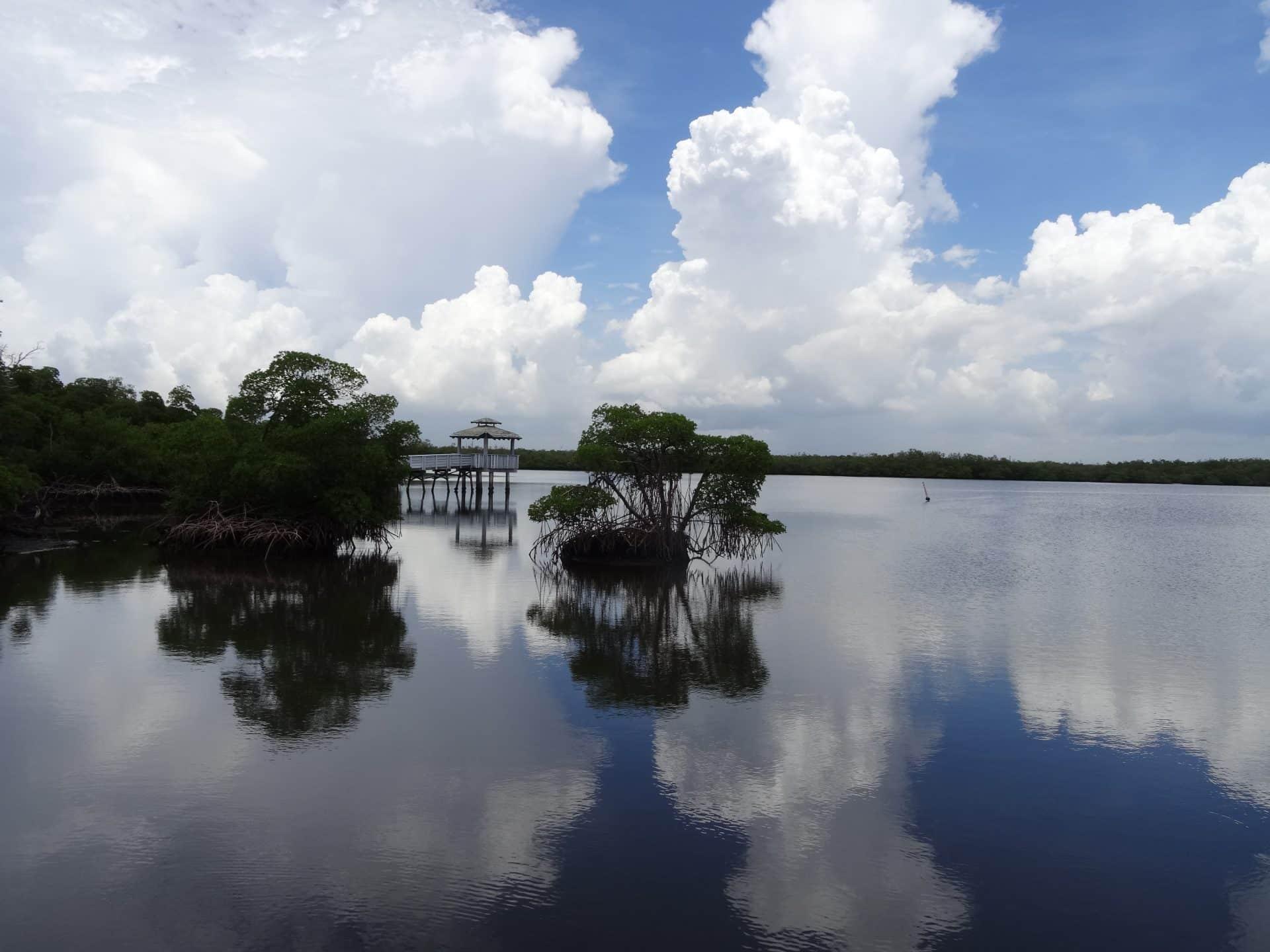 mangrove au Anne Kolb Nature Center