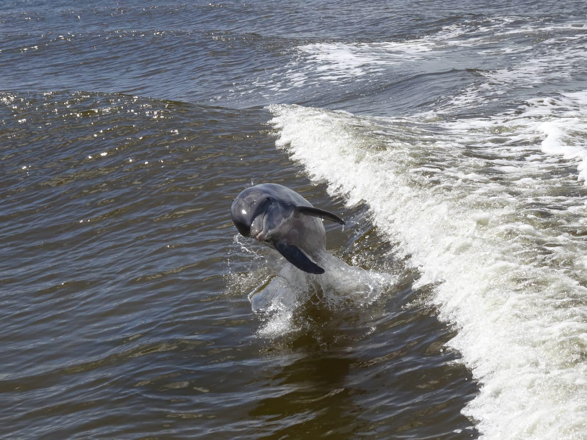 10000 Islands dauphin road trip Floride