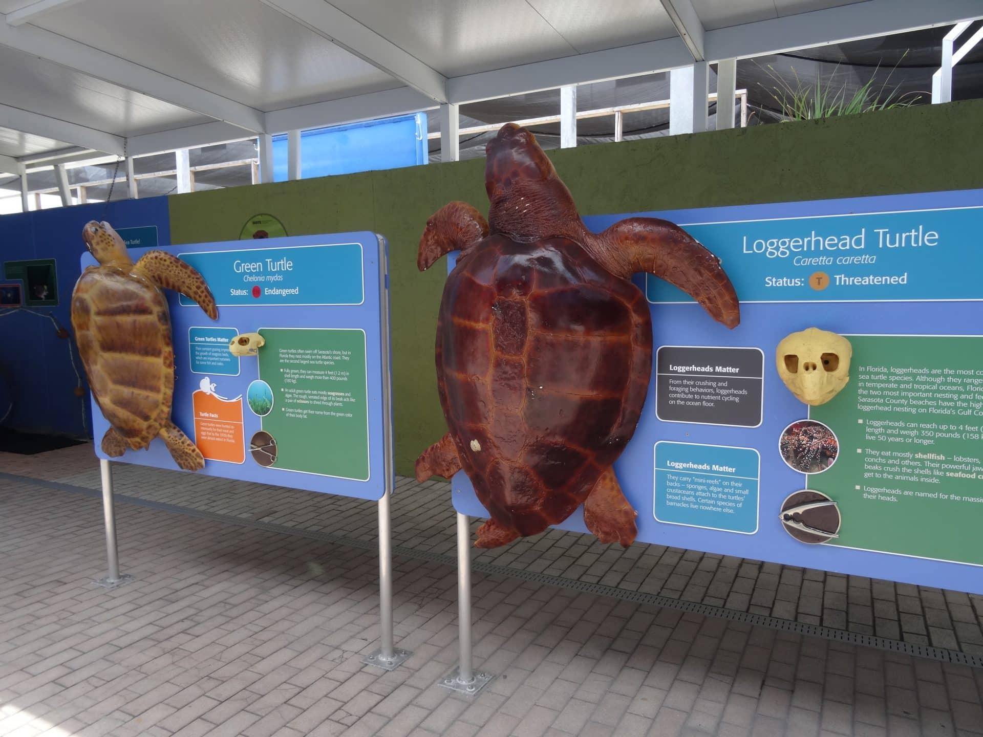Mote marine Laboratory and Aquarium de Sarasota road trip Floride