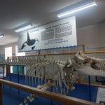 Eden - Killer Whale Museum