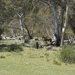 Gungarlin River Camping Area