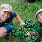 Mornington Peninsula - Red Hill Cherry Farm