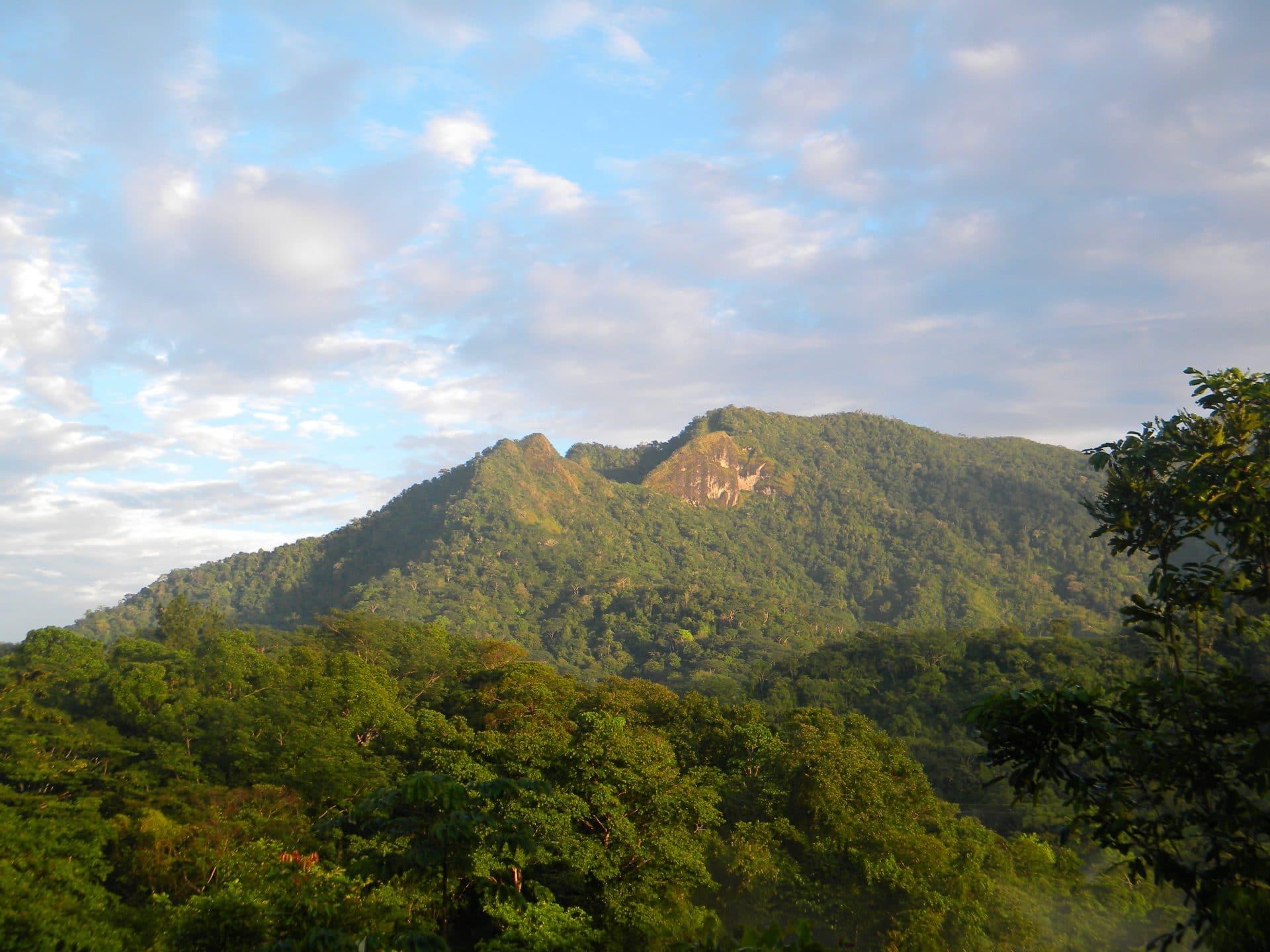 Jungle de Panama