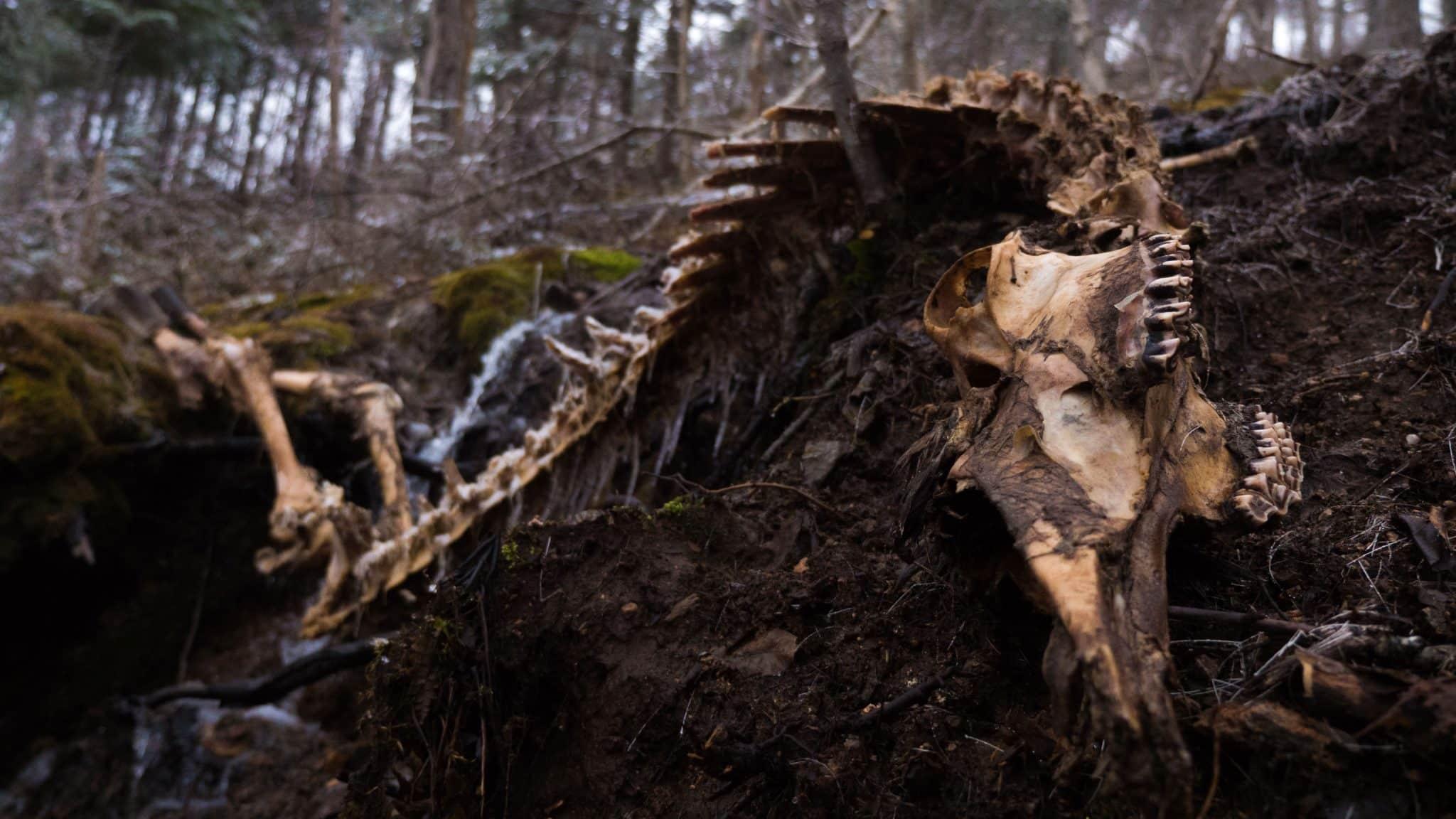 squelette originaux