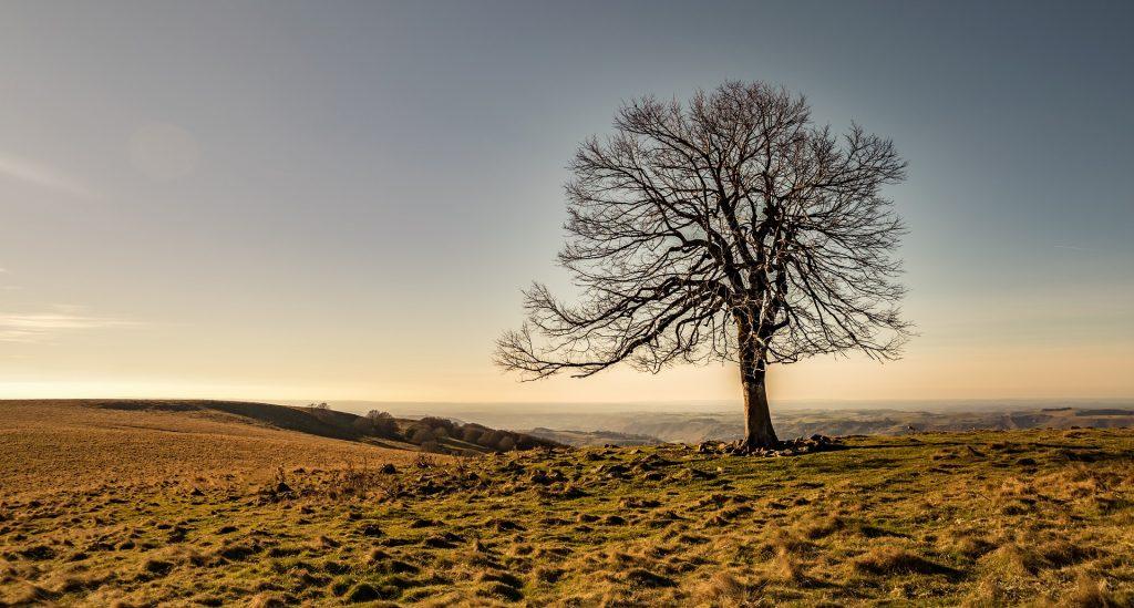 Massif Central France arbre mort