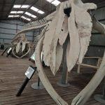 Albany - Musée de la chasse à la baleine road trip australie
