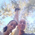 Dave Evans Bicentenary Tree