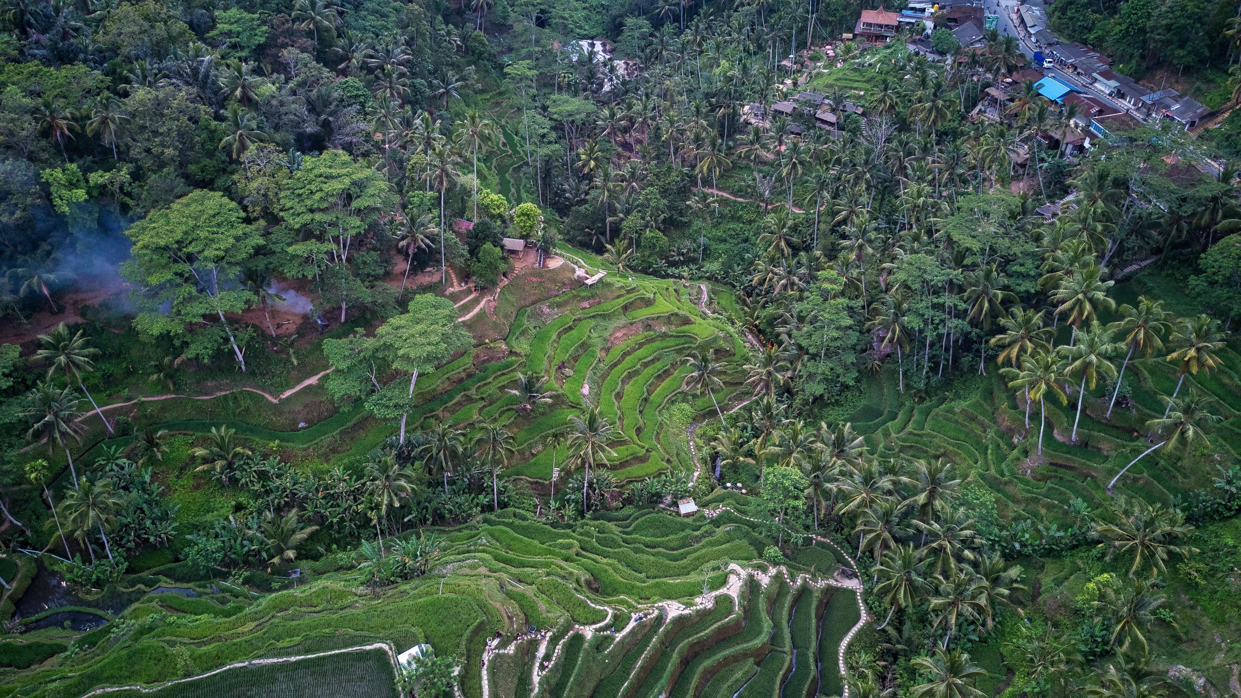 rizieres indonesie road trip