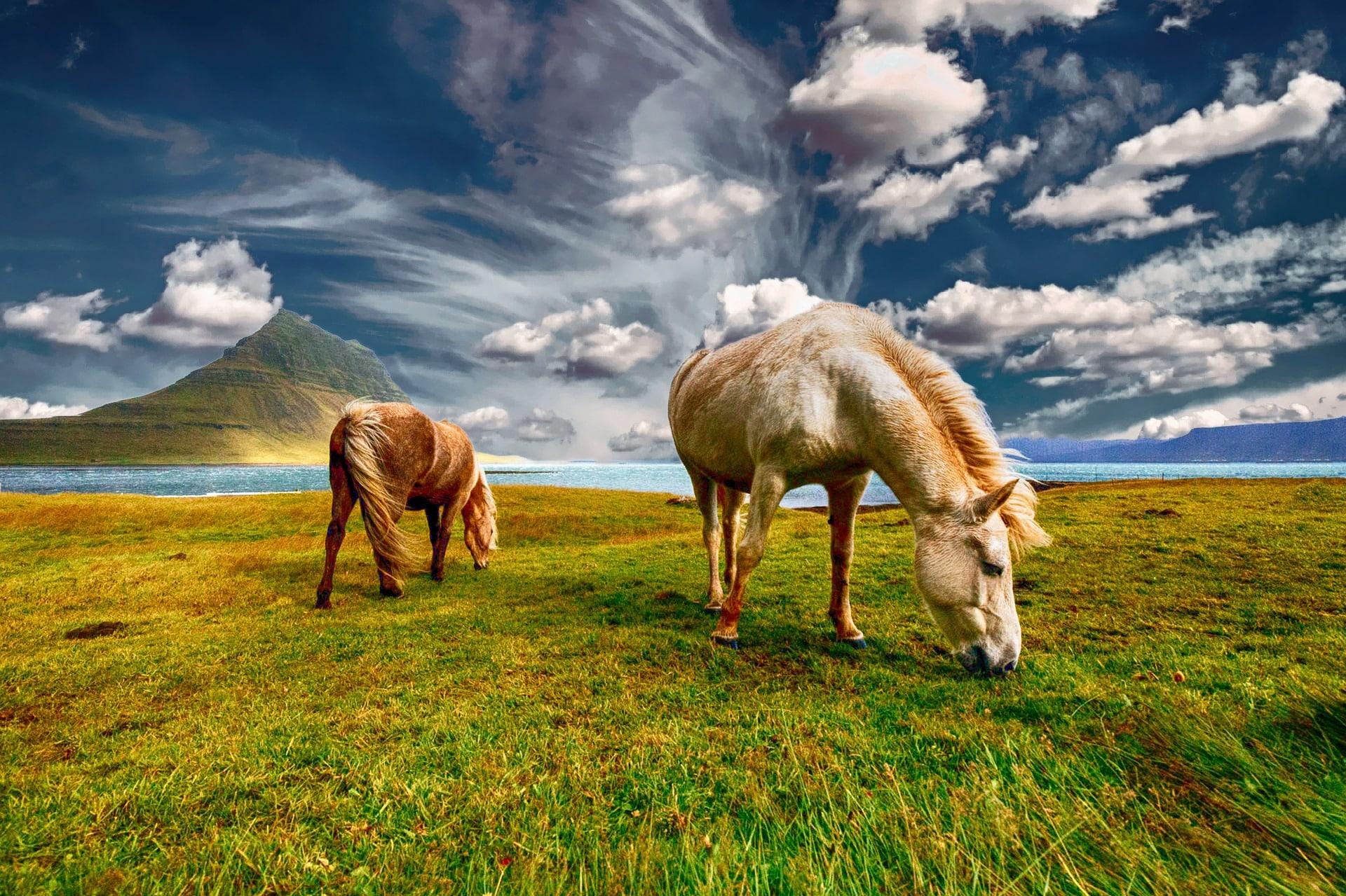 tourisme vert islande chevaux