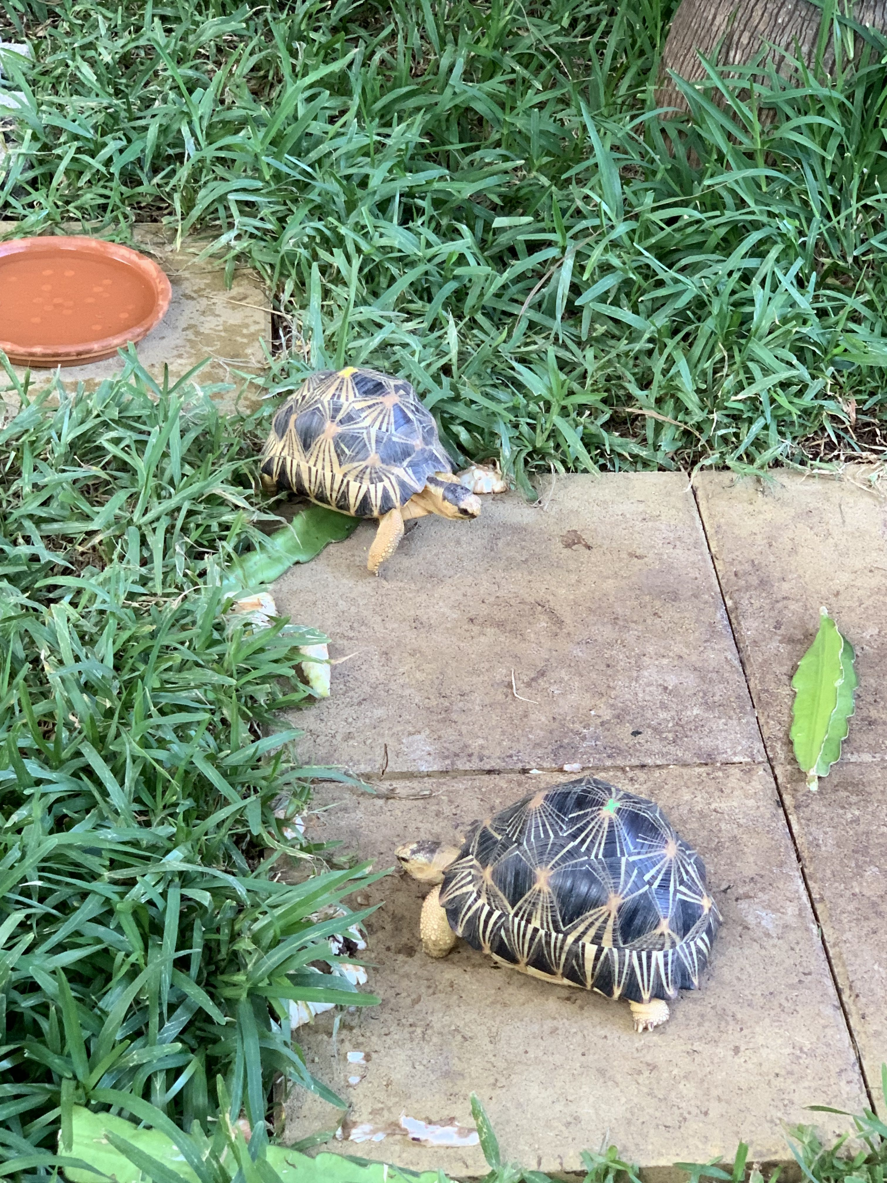 visiter la reunion en 1 semaine tortues