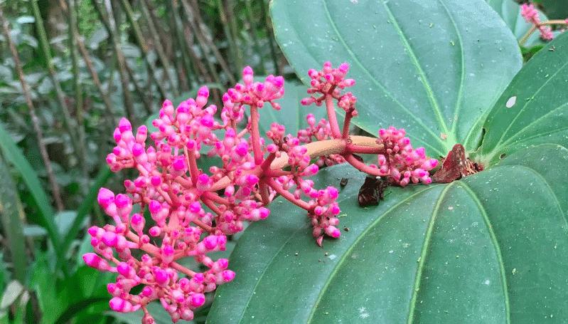 jardin des orchidées parc national du kinabalu