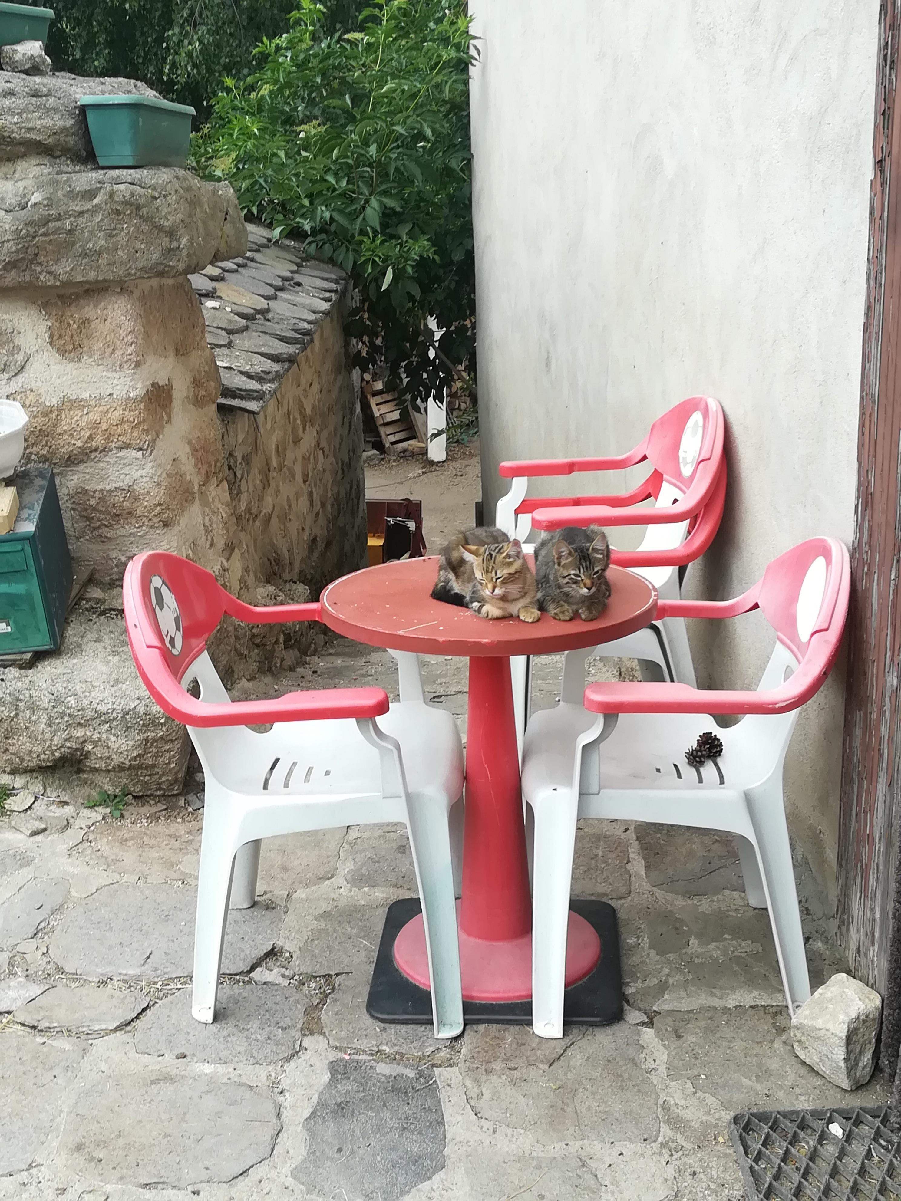 chats chemin de saint jacques de compostelle