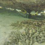 Quobba – Ningaloo Reef road trip australie