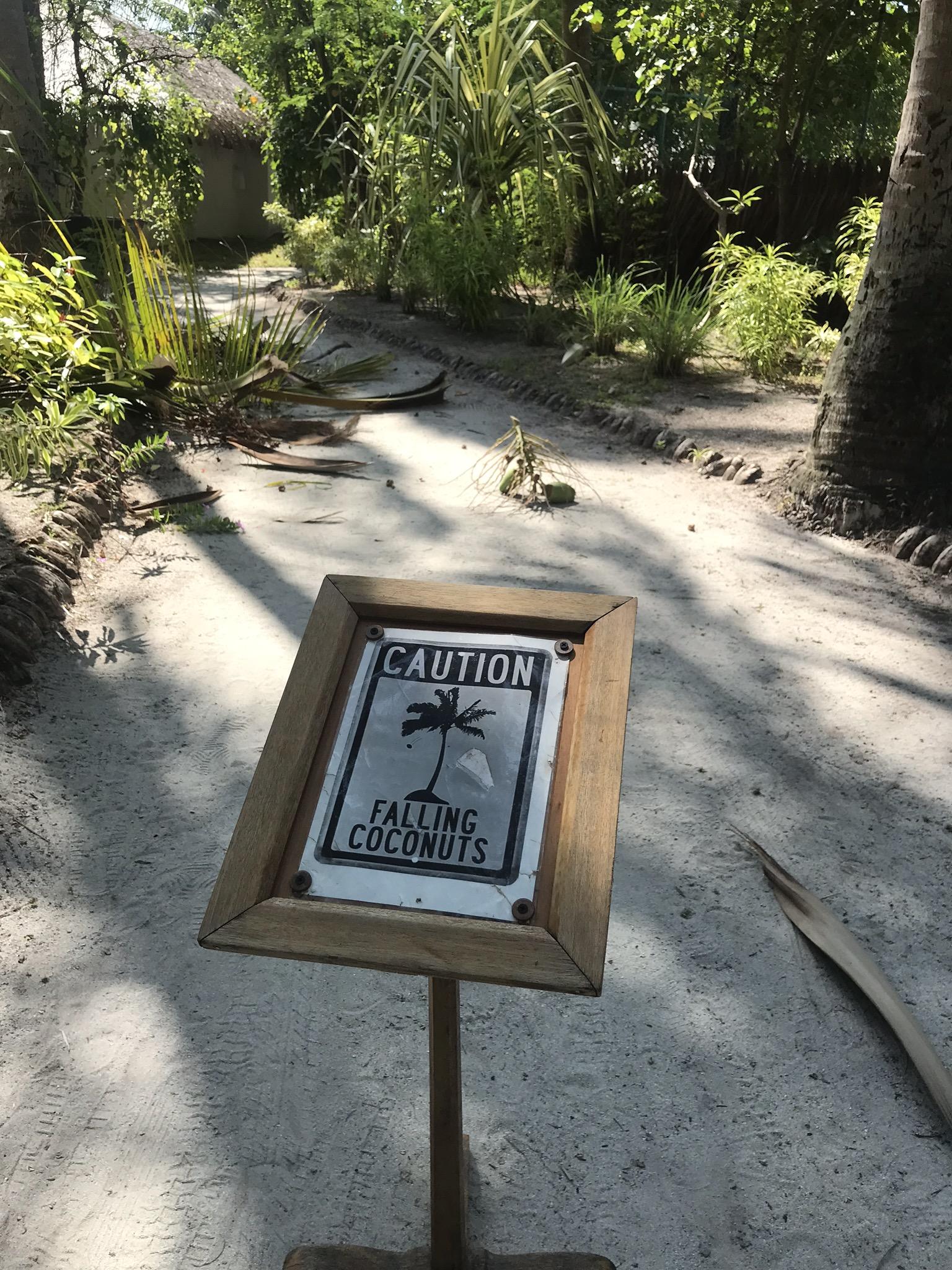 panneau falling coconut maldives