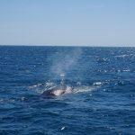 Cape Range National Park – Eco Tour, nager avec un magnifique requin baleine