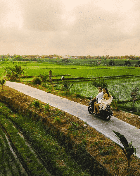 rizières de canggu en scooter