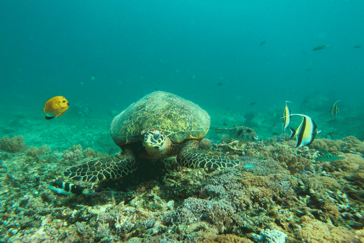 Iles gili tortue fond marin