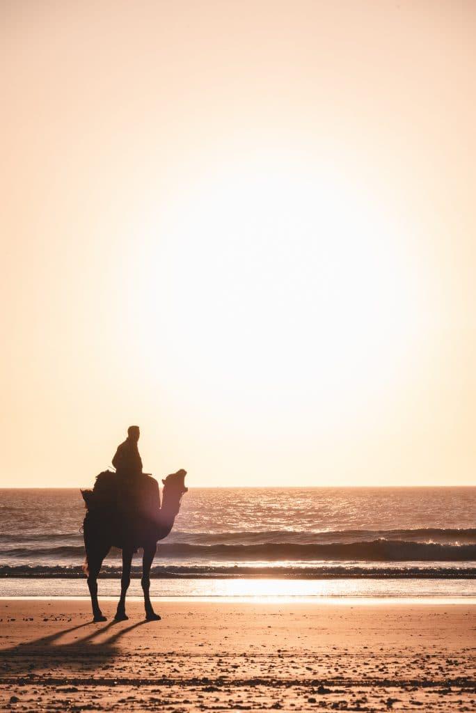 photo de chameau pendant un road trip maroc