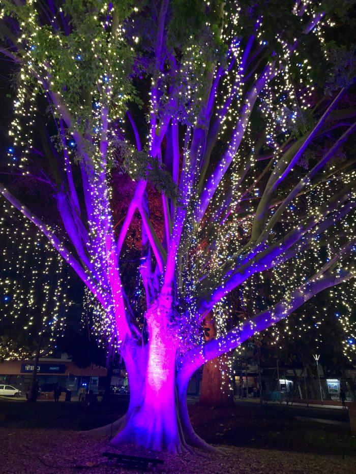 arbre illuminé à nouméa