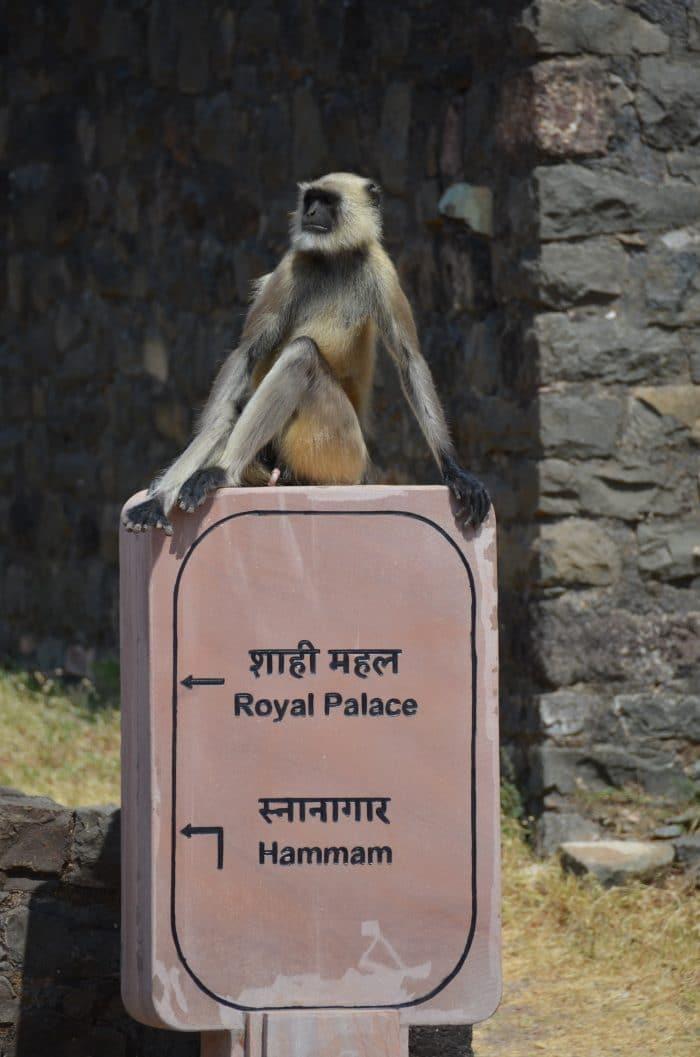 singe sur le panneau du palais royal de mandu