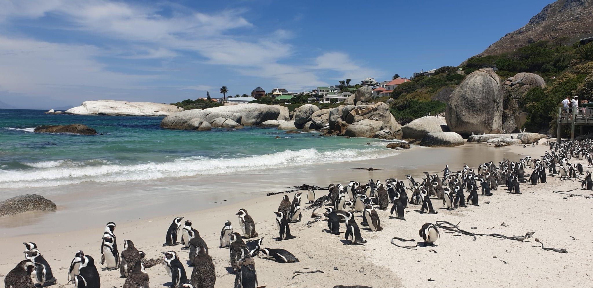 pingouins et manchots sur une plage