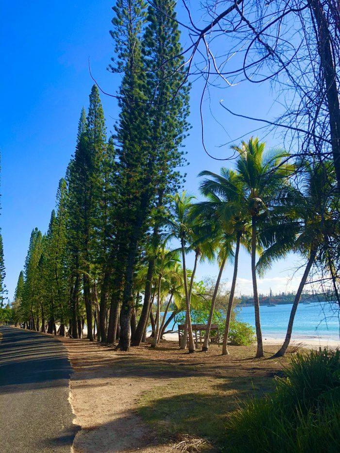 les pins sur l'île de kuto
