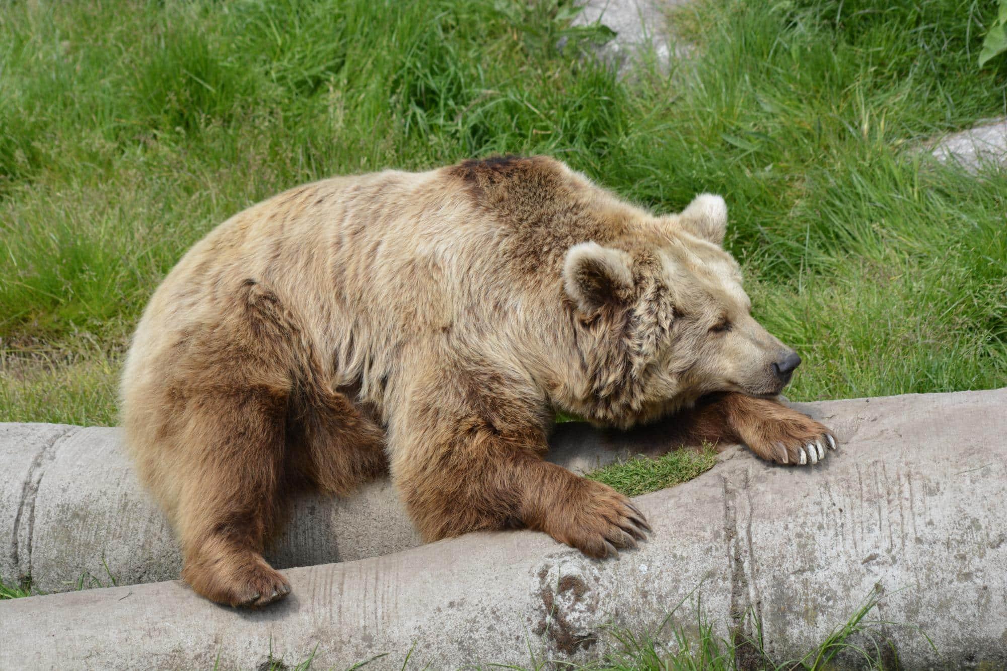 ours au zoo de fort mardyck