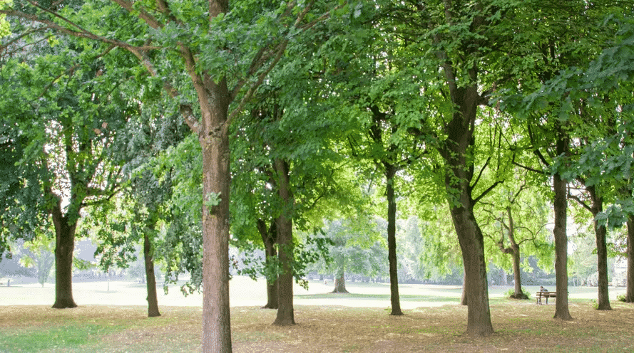 le jardin du gouverneur