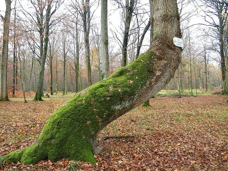 La forêt de Crecy