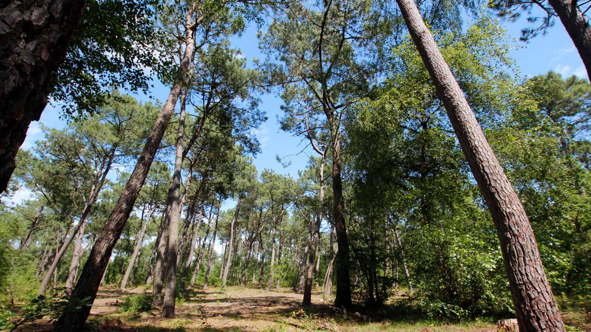 la forêt du touquet